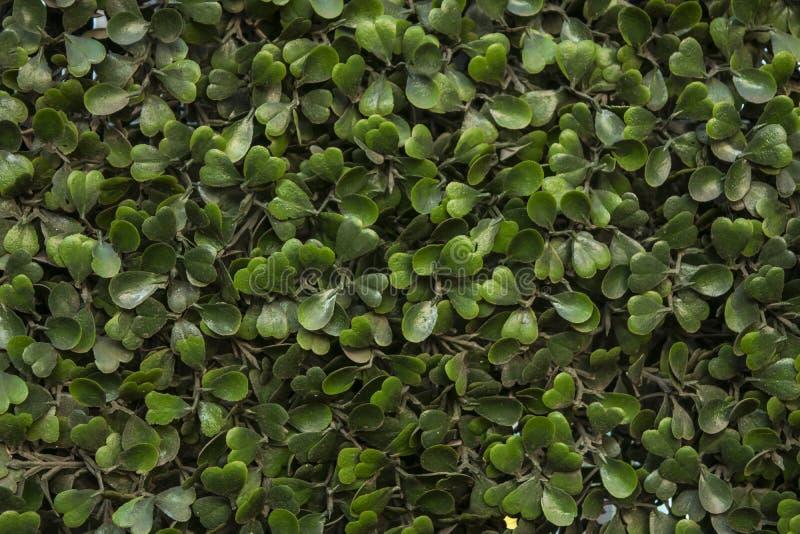 Plantas verdes fotografía de archivo