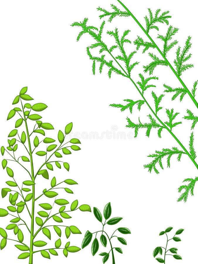 Plantas verdes fotografia de stock royalty free