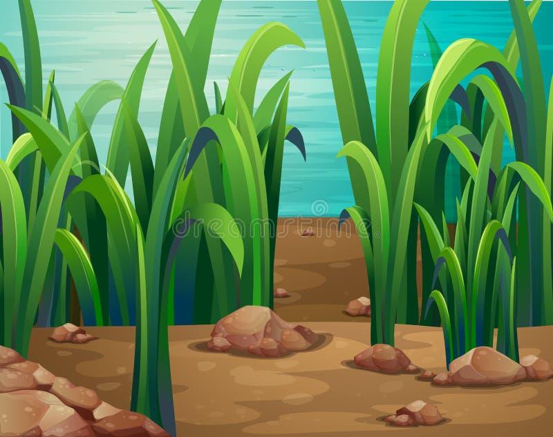 Plantas verdes ao longo do rio ilustração stock