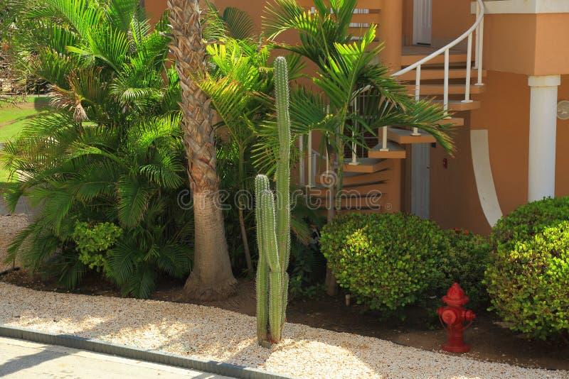 Plantas verdes bonitos, palmeira e escadas de uma casa imagens de stock