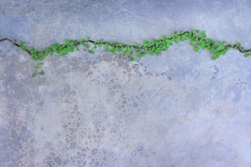 Plantas verdes coloridas de vista superior nas linhas testes padrões que crescem em quebras concretas assoalho, fundo da natureza foto de stock royalty free