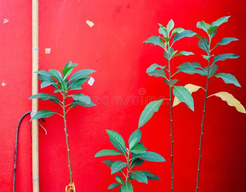 plantas verdes contra a parede vermelha fotografia de stock royalty free