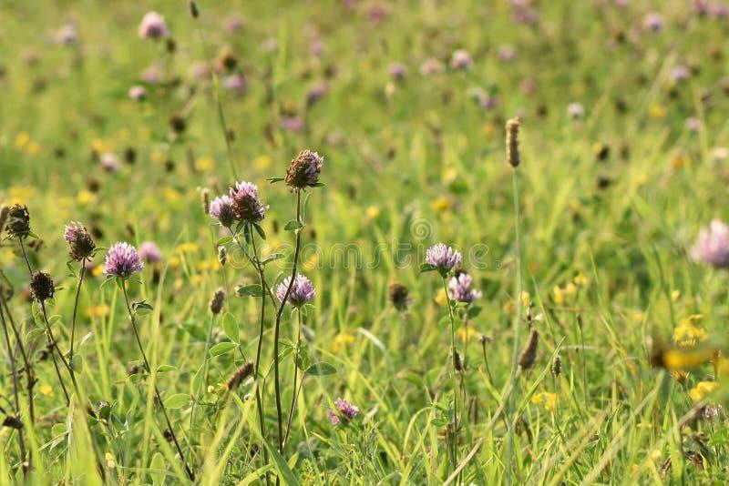 Plantas verdes da largura do prado Os raios do sol iluminam o prado fotos de stock