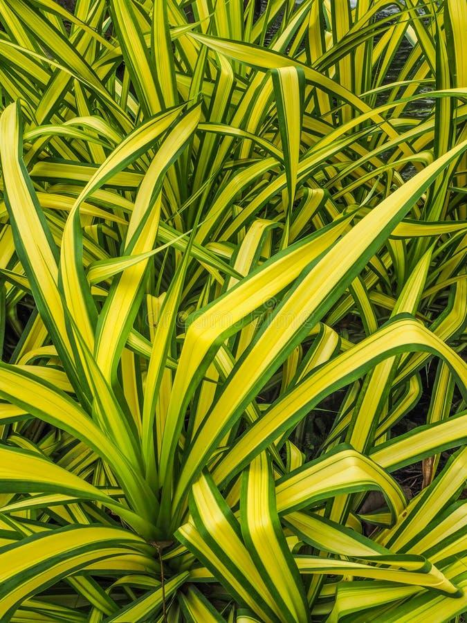 Plantas verdes de las flores imagenes de archivo