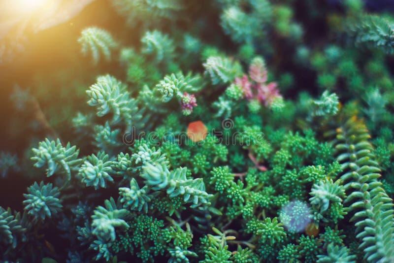 Plantas verdes de los Succulents Ciérrese para arriba de cactus miniatura mezclados Floral minimalista para la tienda floristry foto de archivo libre de regalías