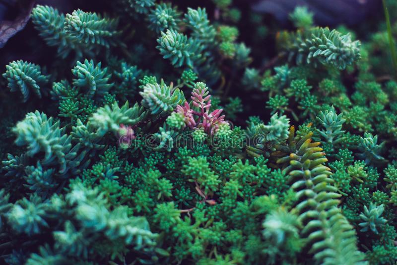 Plantas verdes de los Succulents Ciérrese para arriba de cactus miniatura mezclados Floral minimalista para la tienda floristry fotografía de archivo libre de regalías