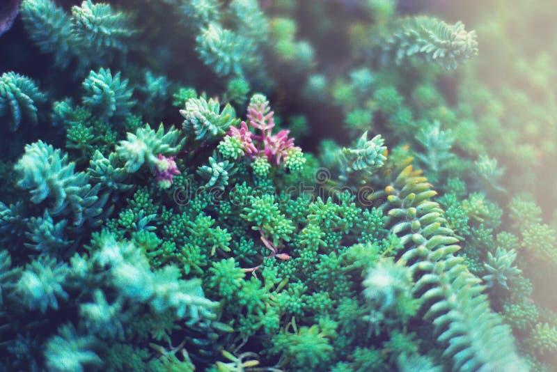 Plantas verdes de los Succulents Ciérrese para arriba de cactus miniatura mezclados Floral minimalista para la tienda floristry imagen de archivo