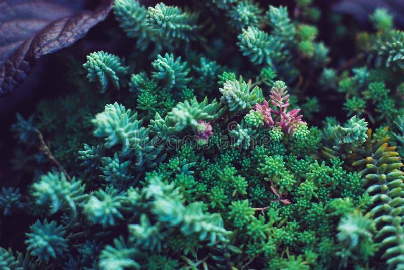 Plantas verdes de los Succulents Ciérrese para arriba de cactus miniatura mezclados Floral minimalista para la tienda floristry fotos de archivo