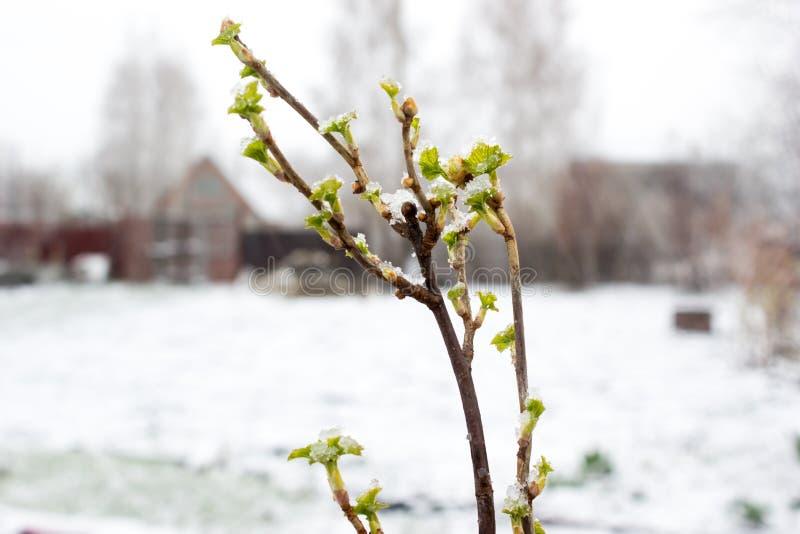 Plantas verdes debajo de la nieve fotos de archivo