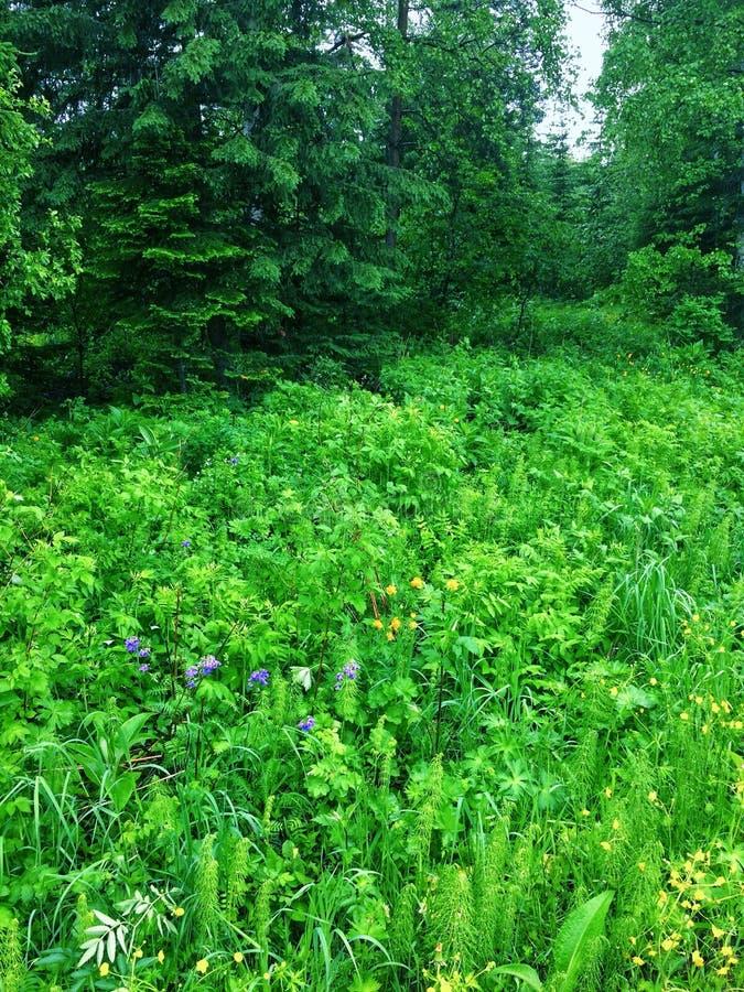Plantas verdes del bosque fotos de archivo libres de regalías