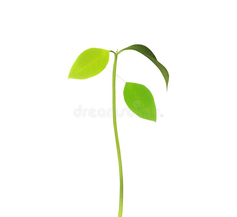 Plantas verdes do broto da árvore fotos de stock royalty free