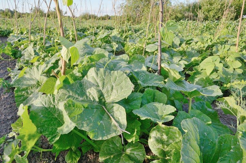 Plantas verdes do jardim fresco que crescem no solo exterior fotografia de stock royalty free