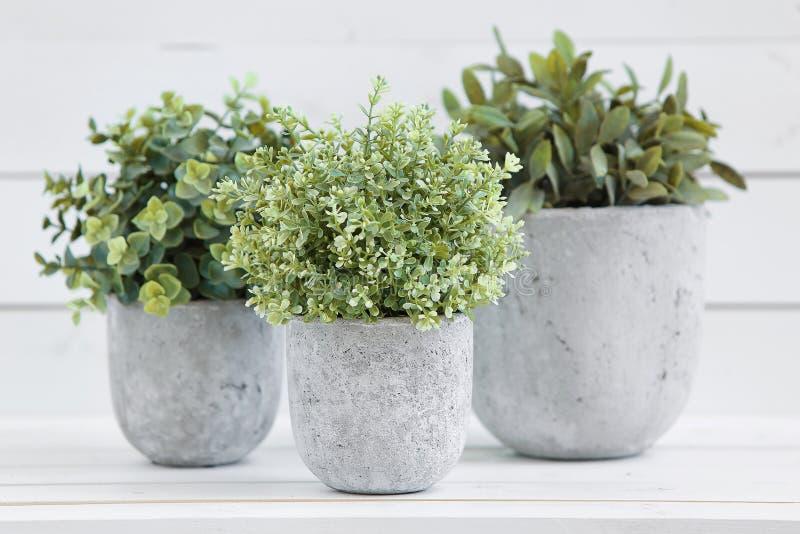 Plantas verdes do potenciômetro imagem de stock