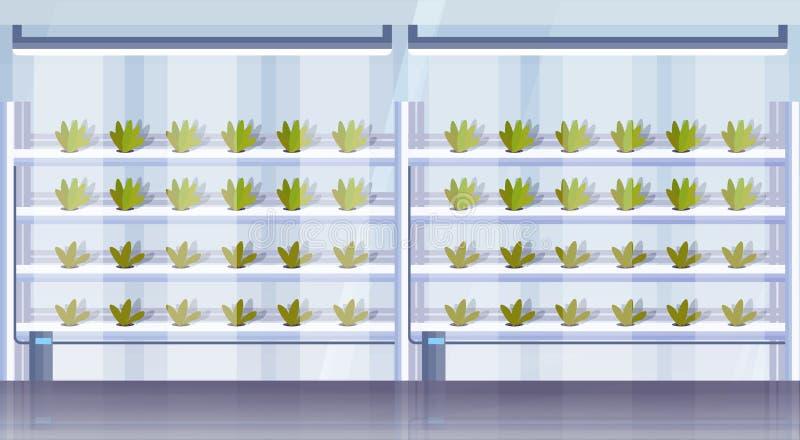 Plantas verdes elegantes del concepto de sistema de cultivo de la agricultura interior vertical hidrop?nica org?nica moderna de l stock de ilustración
