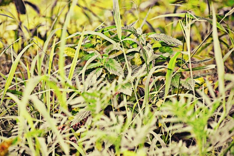 Plantas verdes em meu jardim fotos de stock