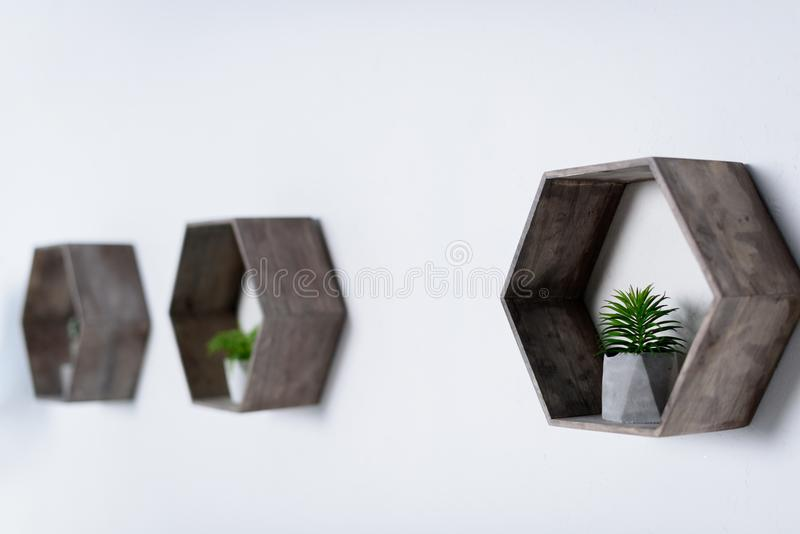 plantas verdes em pasta em prateleiras de madeira fotografia de stock
