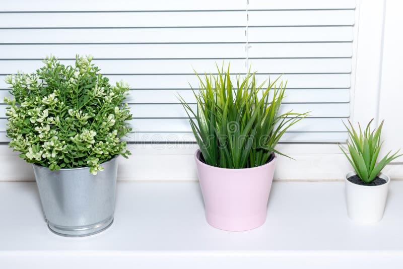 Plantas verdes em uns potenciômetros de flor no peitoril da janela, decoração interior moderna brilhante fotos de stock royalty free