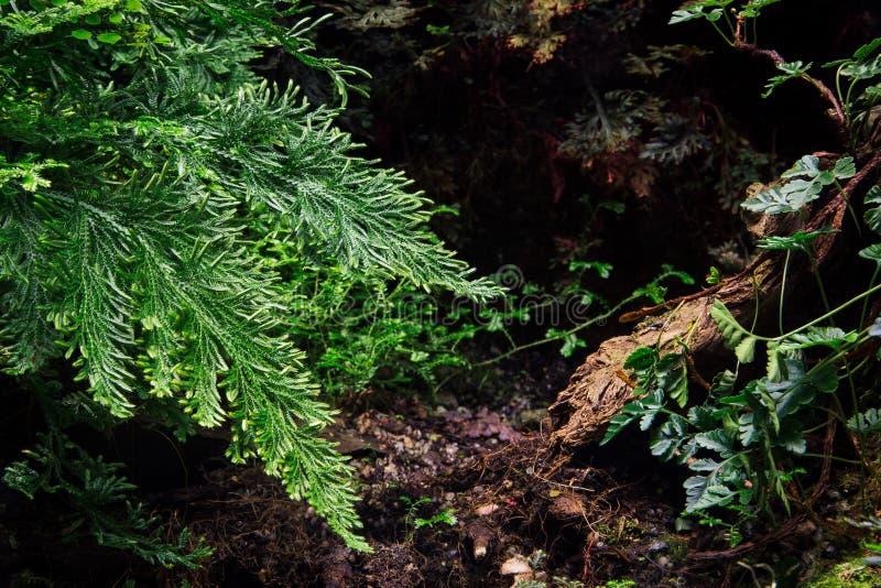 Plantas verdes en día de verano foto de archivo libre de regalías