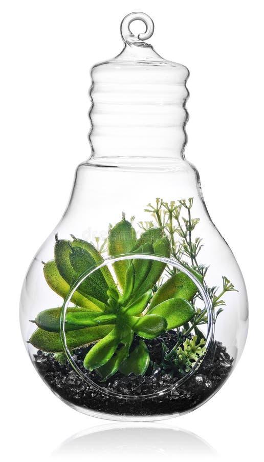 Plantas verdes en el medio del bulbo transparente fotografía de archivo libre de regalías