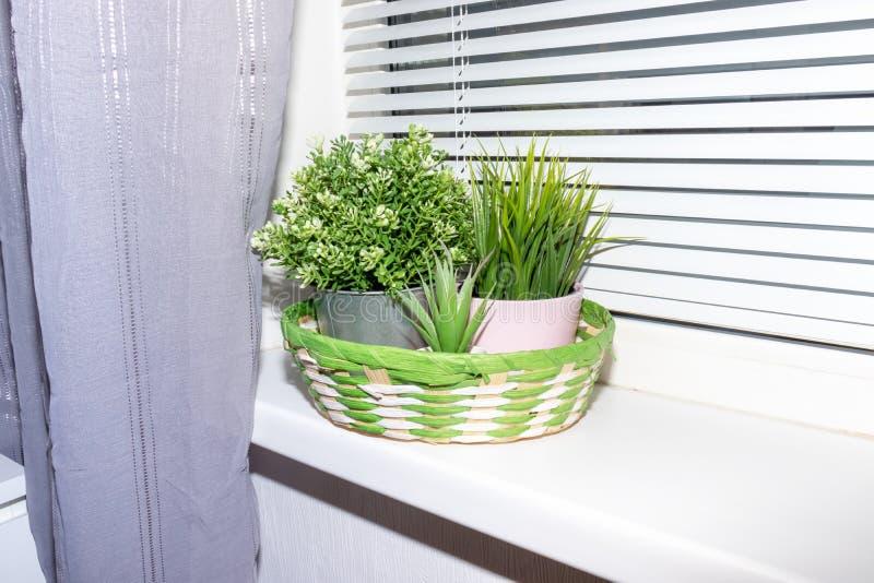Plantas verdes en el travesaño, las persianas y las cortinas blancos de la ventana Interior del hogar o de la oficina imagen de archivo libre de regalías