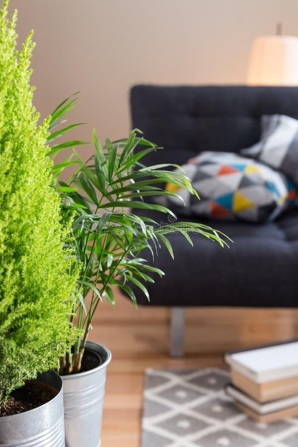 Plantas verdes en la sala de estar fotos de archivo