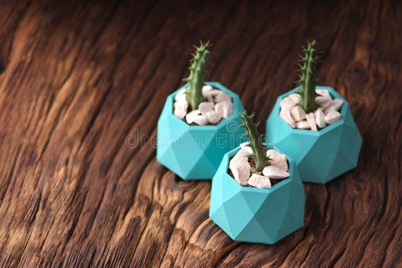 plantas verdes en tres potes concretos, decoración casera creativa Orientación horizontal fotos de archivo libres de regalías