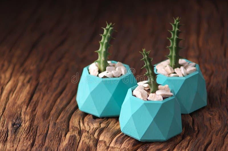plantas verdes en tres potes concretos, decoración casera creativa Orientación horizontal imagen de archivo