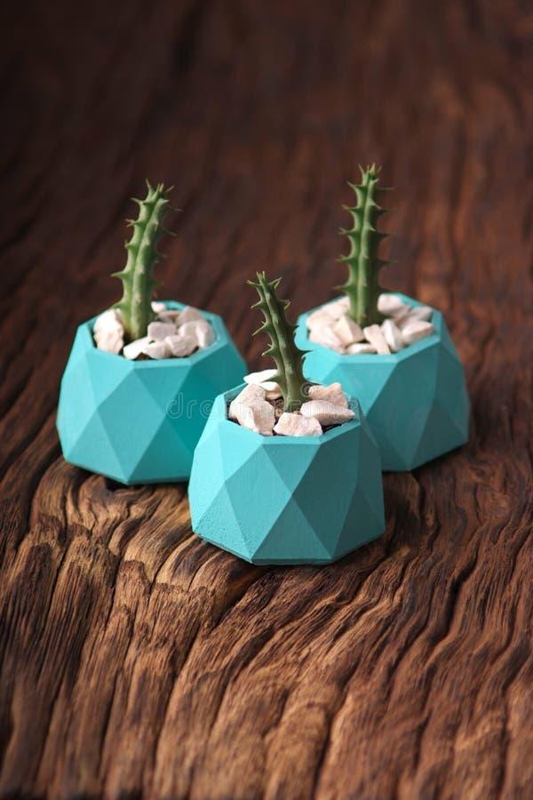 plantas verdes en tres potes concretos, decoración casera creativa Orientación vertical fotografía de archivo libre de regalías