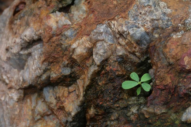 Plantas verdes isoladas no fundo das rochas fotografia de stock royalty free