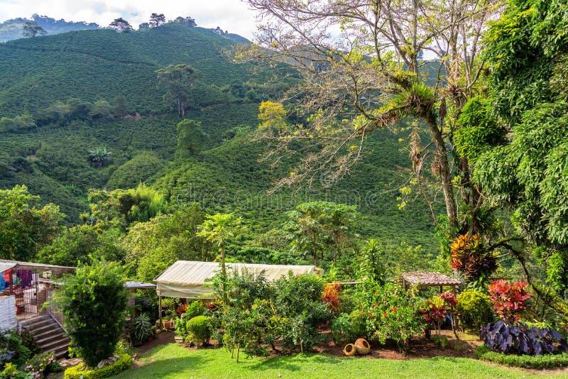 Plantas verdes luxúrias e café fotografia de stock