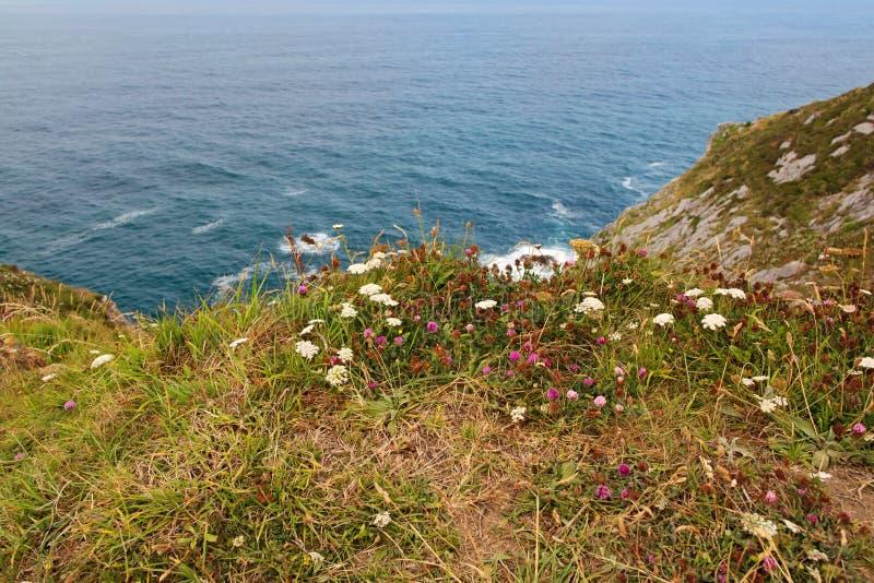 Plantas verdes na costa do oceano fotografia de stock royalty free