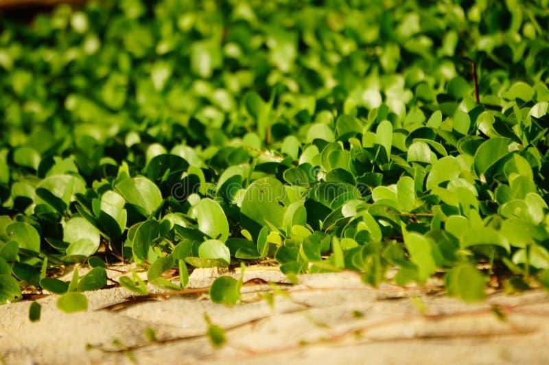 Plantas verdes na praia imagens de stock royalty free