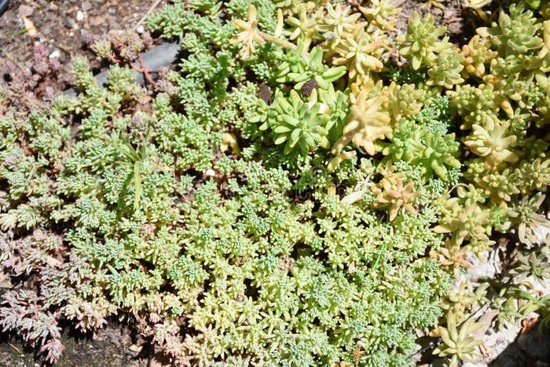 Plantas verdes no jardim imagem de stock royalty free