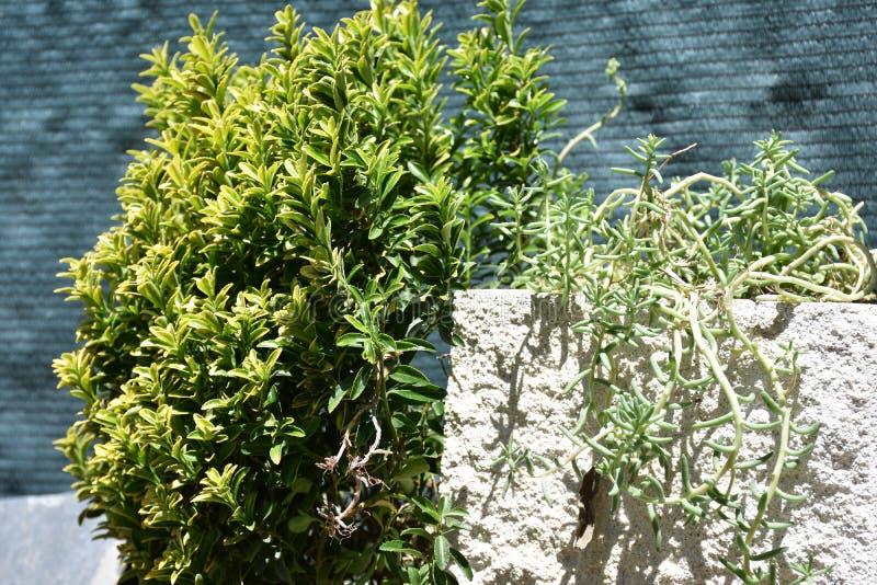 Plantas verdes no jardim foto de stock royalty free