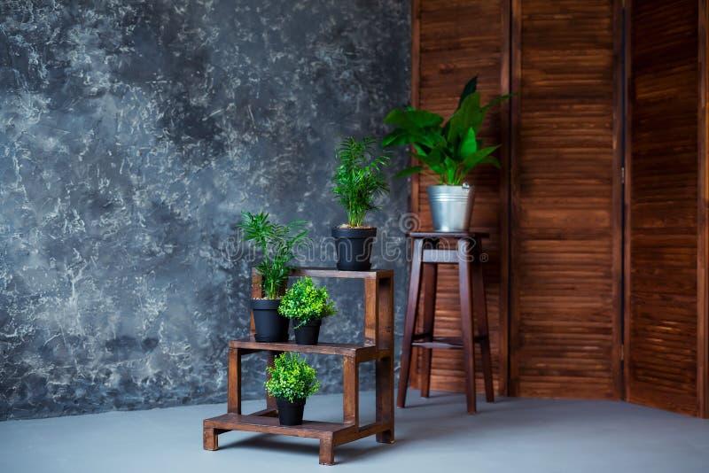 Plantas verdes no potenciômetro que decora uma sala com interior de madeira do sótão fotografia de stock royalty free