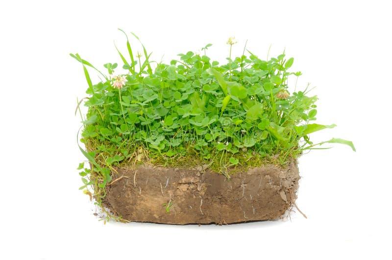 Plantas verdes no solo imagem de stock