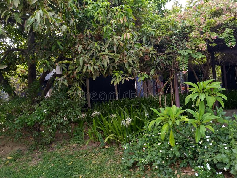 Plantas verdes no tempo de manhã na estação de mola foto de stock royalty free