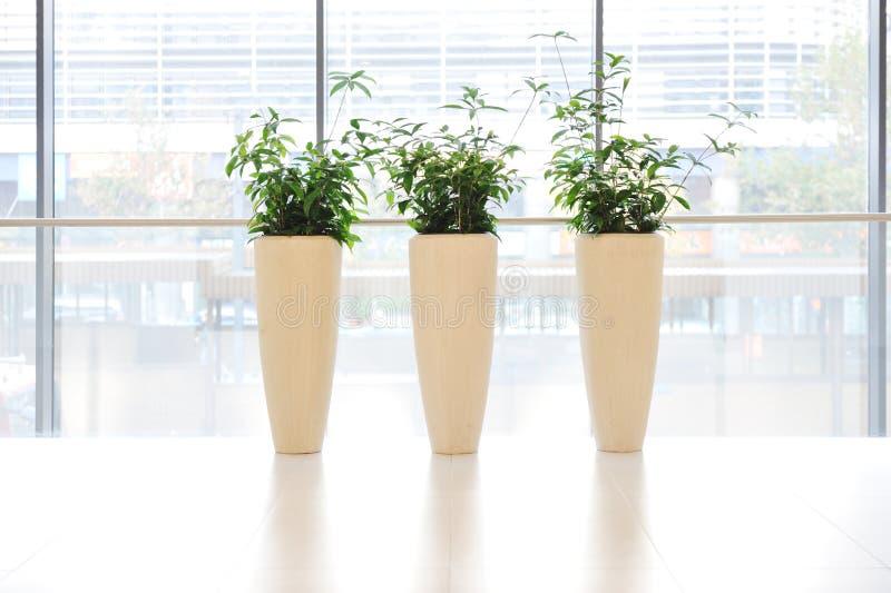 Plantas verdes no vaso imagens de stock royalty free