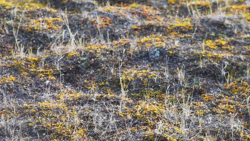 Plantas verdes novas que crescem acima Ervas daninhas na terra seca vídeo Grama verde e grama seca Sujeira e seixos, algum hayes  foto de stock