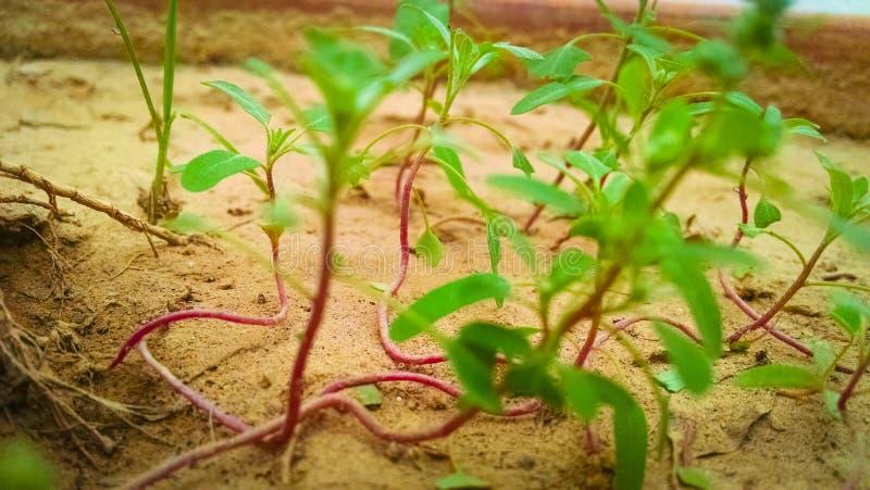 Plantas verdes pequenas fotografia de stock