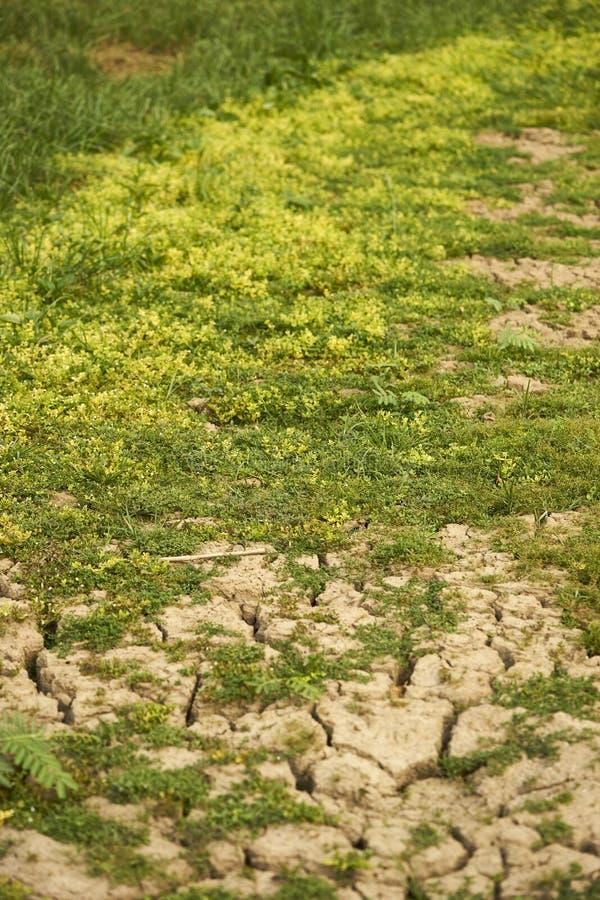 Plantas verdes que crescem o solo inoperante da calha fotos de stock