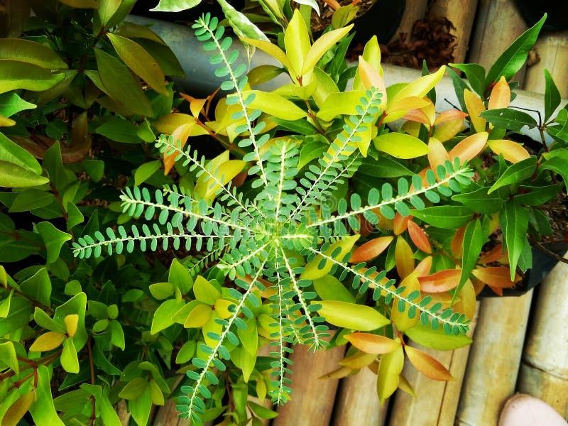 plantas verdes que crescem selvagens fotografia de stock