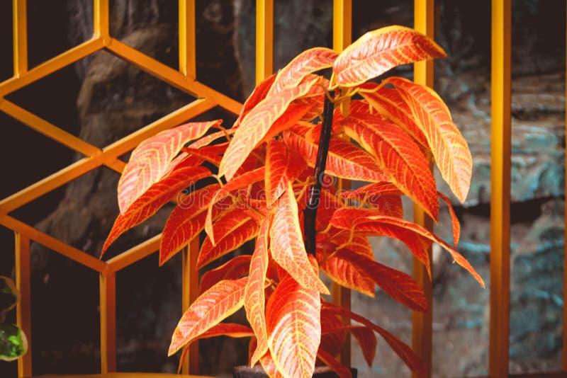 Plantas vermelhas da flor no jardim da casa imagem de stock royalty free