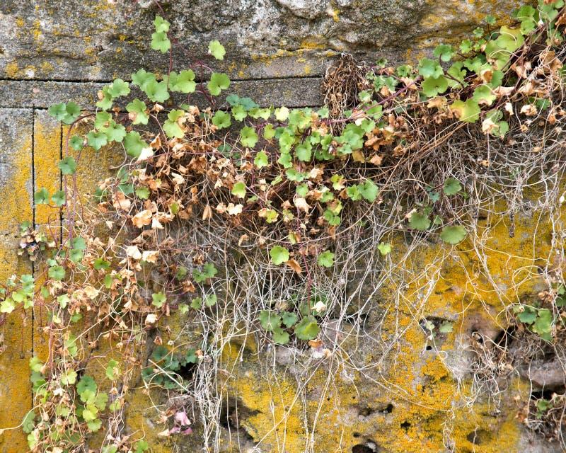 Download Plantas viejas que suben imagen de archivo. Imagen de decorativo - 100535187