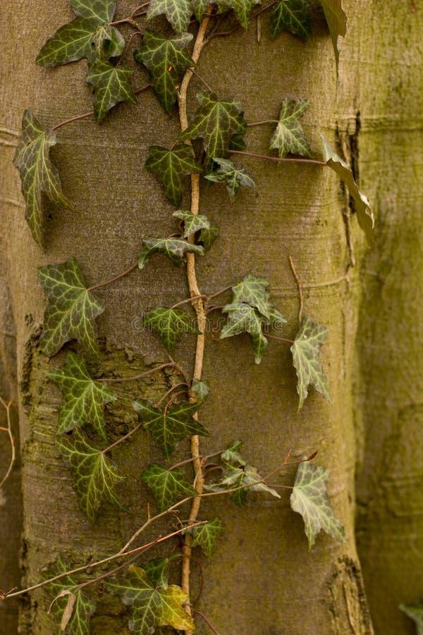 Plantas y árboles foto de archivo