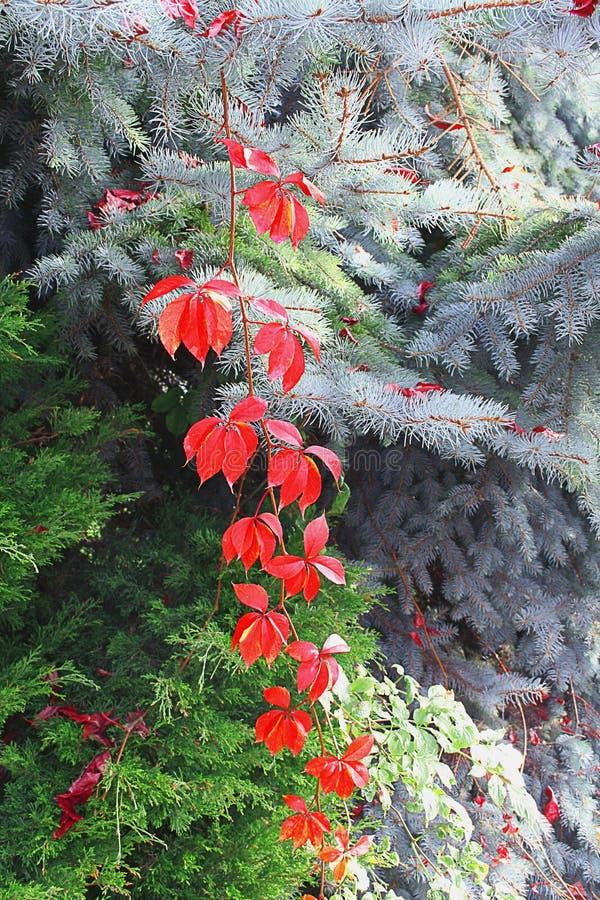 Plantas y árboles del otoño imágenes de archivo libres de regalías