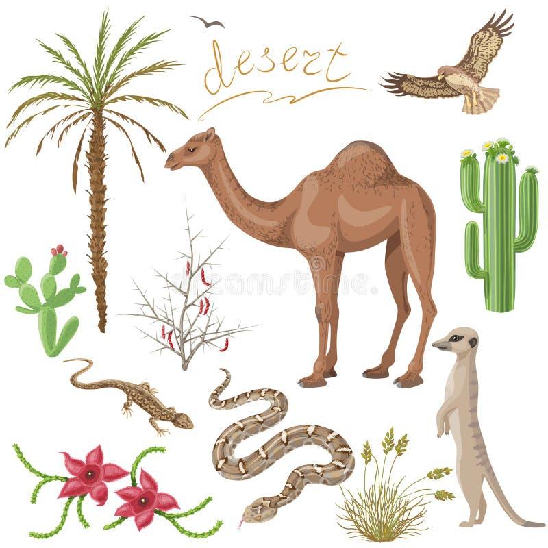 Plantas y animales de desierto fijados libre illustration
