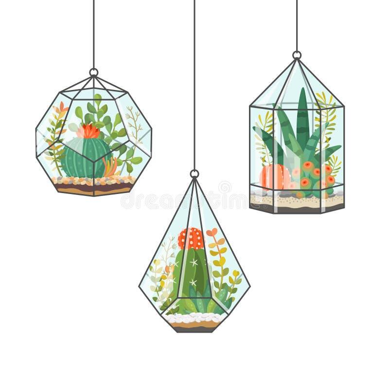 Plantas y cactus tropicales de la casa en terrarios colgantes stock de ilustración