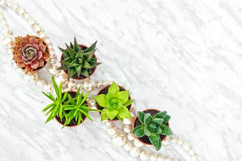 Plantas y collar suculentos de la perla fotos de archivo libres de regalías