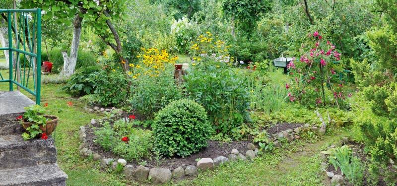 Plantas y flores del verano de julio en una cama cerca del europeo rural foto de archivo libre de regalías